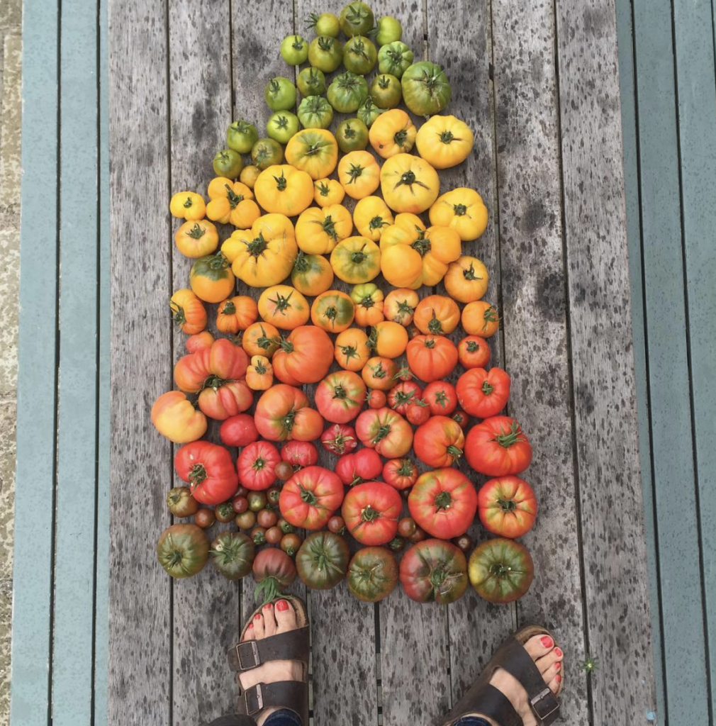 To give an idea of how many different varieties we grow here is a selection from September 2016 I posted on Instagram @pascaledepascale  You can tell they're organic by my Birkenstocks